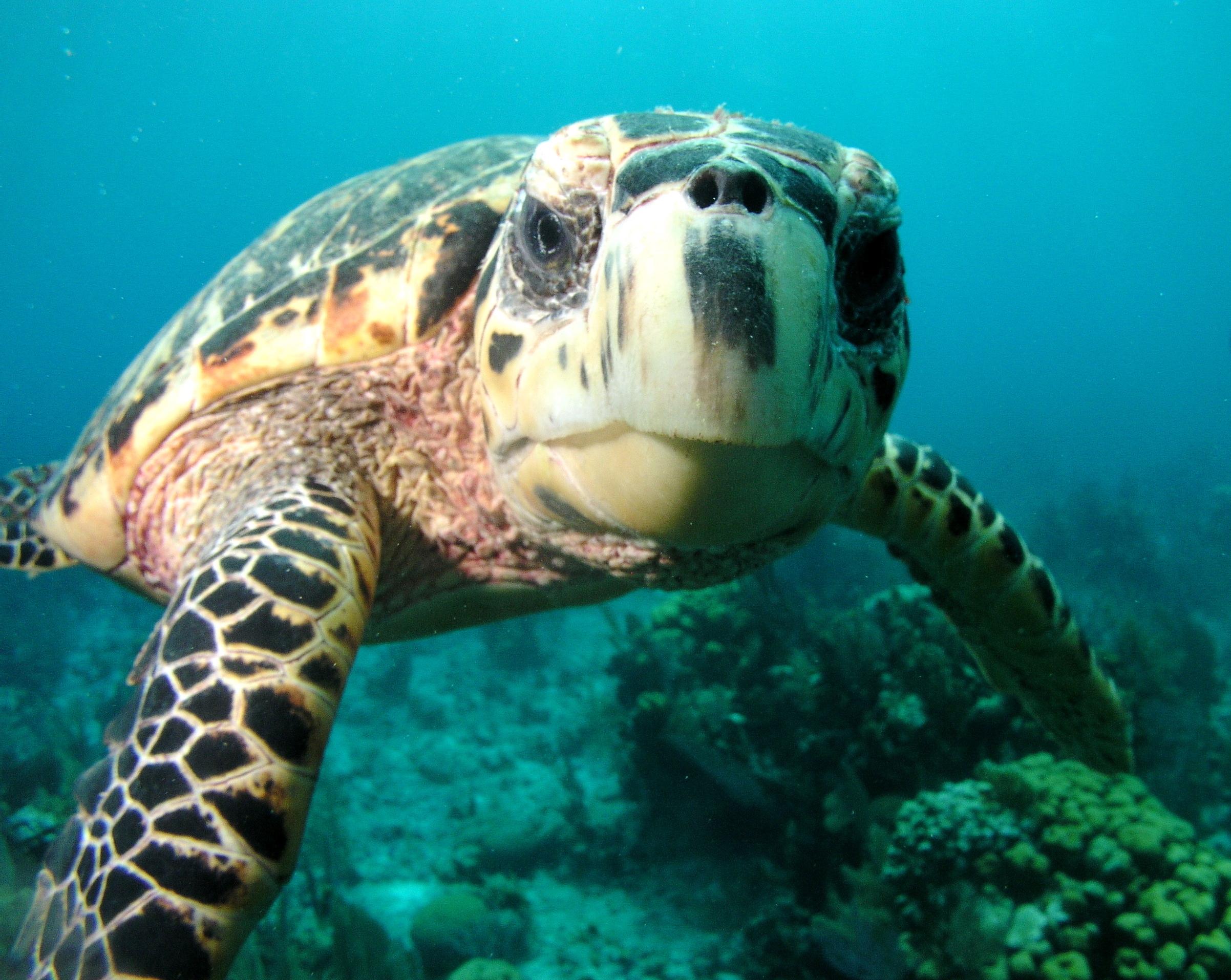 Sea Turtle St George Island