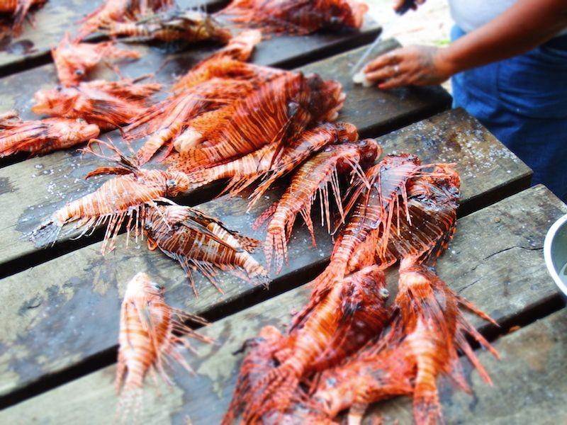 DIVING-Lionfish-belize